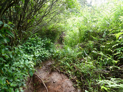 picture of the muddy overgrown path